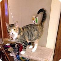 Adopt A Pet :: Snickerdoodle - Fowlerville, MI