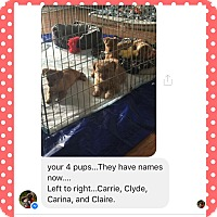 Adopt A Pet :: Carrie, Carina, and Claire - Ashville, OH