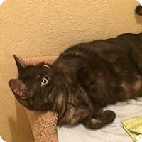 Adopt A Pet :: Toby - Pleasanton, CA