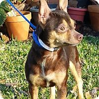 Adopt A Pet :: CHATA - Houston, TX