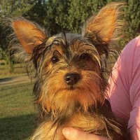 Adopt A Pet :: Emma - Salem, NH