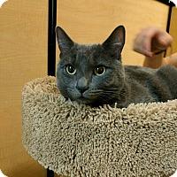 Adopt A Pet :: LALA - Mesa, AZ