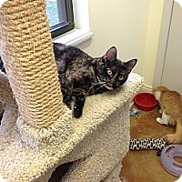 Adopt A Pet :: Merry - Lake Charles, LA