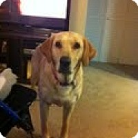Adopt A Pet :: Trixie - Lewisville, IN