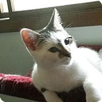 Adopt A Pet :: Pyle - Milwaukee, WI
