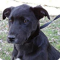 Adopt A Pet :: *Mallory - PENDING - Westport, CT