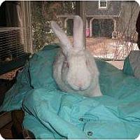 Adopt A Pet :: Amelia - Long Valley, NJ