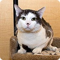 Adopt A Pet :: Diego - Irvine, CA
