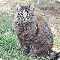 Adopt A Pet :: Ezra - Morgan Hill, CA