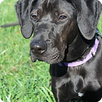 Adopt A Pet :: Lilly - Waldorf, MD