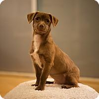 Adopt A Pet :: Dill - San Francisco, CA