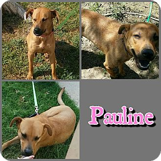 Black Mouth Cur/Labrador Retriever Mix Dog for adoption in Hudspeth County, Texas - Pauline