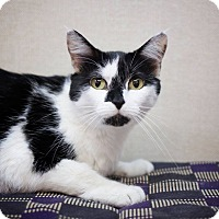 Adopt A Pet :: Kitty Marie - Sterling, KS