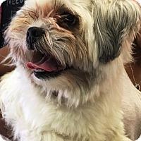 Adopt A Pet :: Saki - Oswego, IL