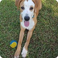 Adopt A Pet :: Daisy - Beaumont, TX