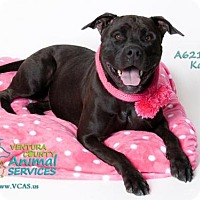 Labrador Retriever Mix Dog for adoption in Camarillo, California - KALI
