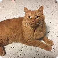 Adopt A Pet :: Lincoln - Glen Mills, PA