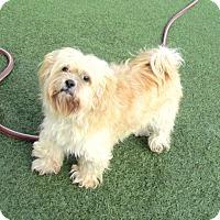 Adopt A Pet :: Charlie - House Springs, MO
