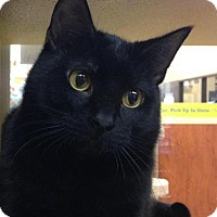 Adopt A Pet :: Batman - Manhattan, KS