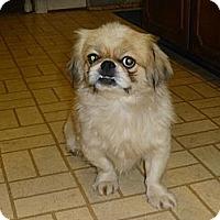 Adopt A Pet :: Mongo - Camden, SC