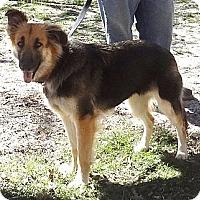 Adopt A Pet :: CLEO / CESAR - SAN ANTONIO, TX
