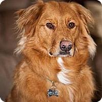 Adopt A Pet :: Toby - Blooming Prairie, MN