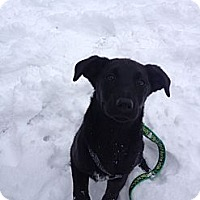 Adopt A Pet :: Lexi - PENDING, in Maine - kennebunkport, ME