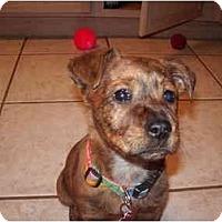 Adopt A Pet :: Dori - Scottsdale, AZ