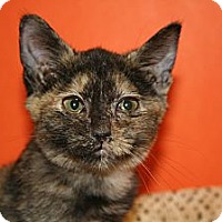 Adopt A Pet :: PHYLLIS - SILVER SPRING, MD