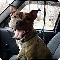 Adopt A Pet :: Rocket URGENT - Dayton, OH