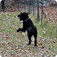 Adopt A Pet :: ZEUS (SRC#1341) IN NC - Lenoir, NC