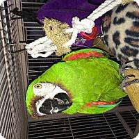 Adopt A Pet :: Max - Punta Gorda, FL
