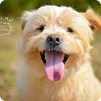 Adopt A Pet :: Toby - Fort Valley, GA