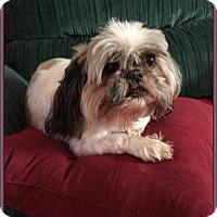 Adopt A Pet :: Gidget - Hampton, VA
