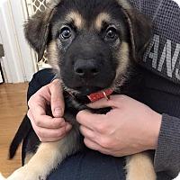 Adopt A Pet :: NISO - Winnipeg, MB