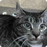 Adopt A Pet :: URGENT on 2/15 at DEVORE - San Bernardino, CA