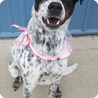 Adopt A Pet :: Lexie - Holton, KS