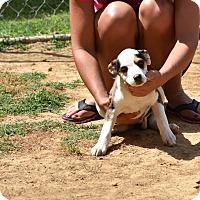 Adopt A Pet :: Vega - Groton, MA