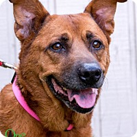 Shepherd (Unknown Type) Dog for adoption in Savannah, Georgia - Maggie