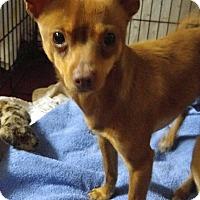 Adopt A Pet :: Chico - Jarrell, TX
