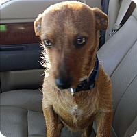 Adopt A Pet :: BANNER - Lubbock, TX