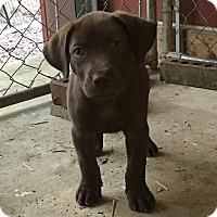 Adopt A Pet :: Dan (ADOPTION PENDING) - Buffalo, NY