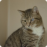Adopt A Pet :: Bo $20 - Lincolnton, NC