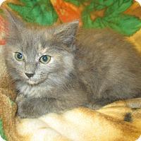 Adopt A Pet :: Brianna - Decatur, AL