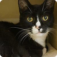 Adopt A Pet :: Bootsie - Salem, NH