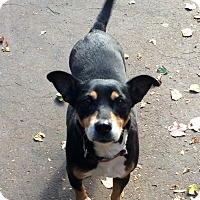 Adopt A Pet :: Que in CT - Manchester, CT