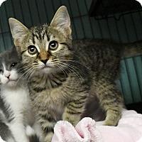 Adopt A Pet :: Meagan - Tomball, TX