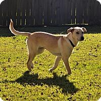 Adopt A Pet :: Izzy - Houston, TX