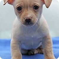 Adopt A Pet :: Spike - Yuba City, CA
