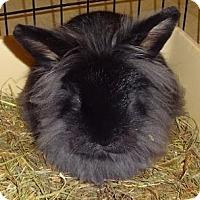 Adopt A Pet :: Bensen - Woburn, MA